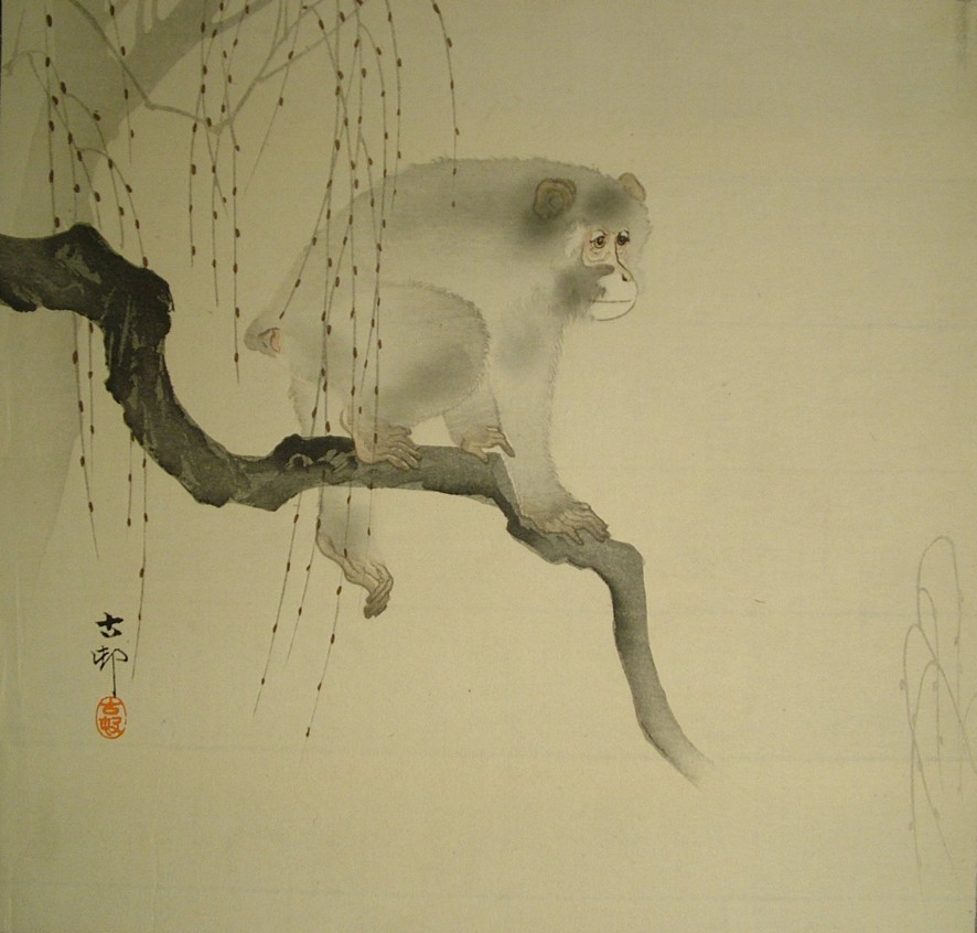 Ohara Koson (1877–1945) Monkey on a willow branch Japan Colour woodblock print 1900 EA1989.177 This print shows a Japanese macaque, a species of monkey that is native to Japan. Ohara Koson was a prolific printmaker, best known for his depictions of birds and flowers. Especially in his early work, Koson's prints had a very painterly feel. When this print was made around 1900, Japanese prints were made by division of labour; Koson was the print designer who worked with blockcutters and printers under the direction of a publisher.